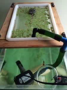 filtro de planta