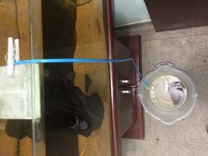 como colocar peixe no aquario